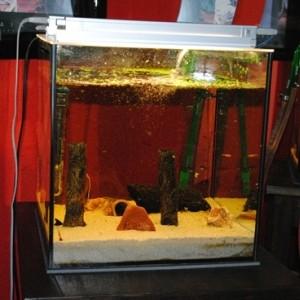 aquarium im wohn esszimmer. Black Bedroom Furniture Sets. Home Design Ideas